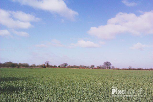 Walking Carbrooke 18th April (1)