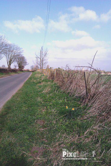 Walking Carbrooke 18th April (3)