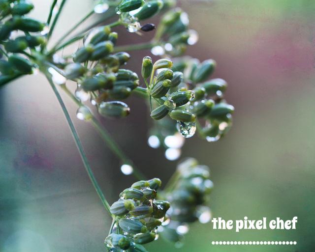 The pixel chef prints (16)