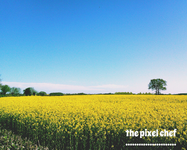 The pixel chef prints (9)