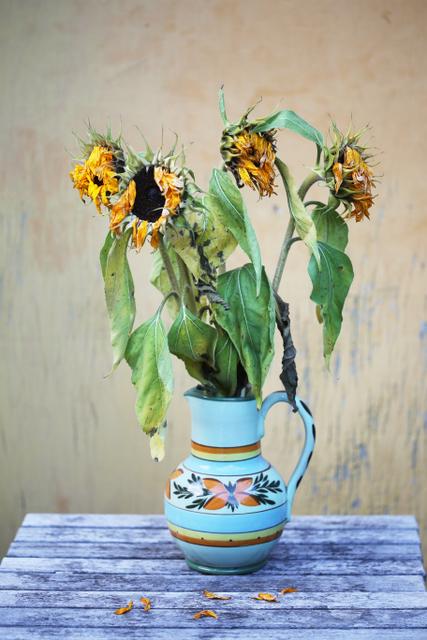 dead sunflowers (4)
